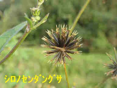 f:id:chuumeikun:20170928215922j:plain