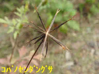 f:id:chuumeikun:20170928215956j:plain