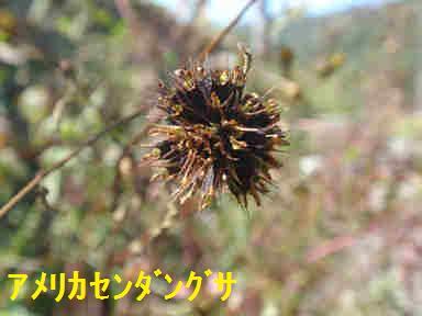 f:id:chuumeikun:20170928220014j:plain