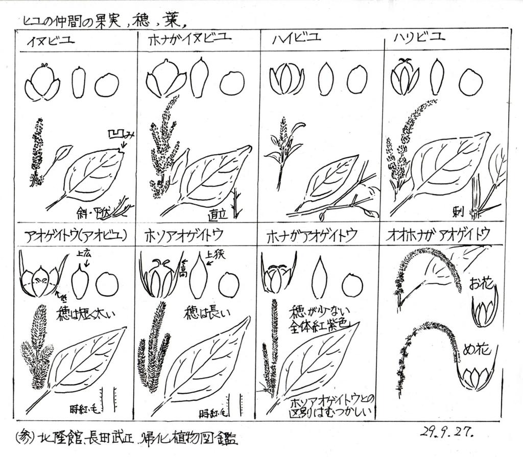 f:id:chuumeikun:20170929203658j:plain