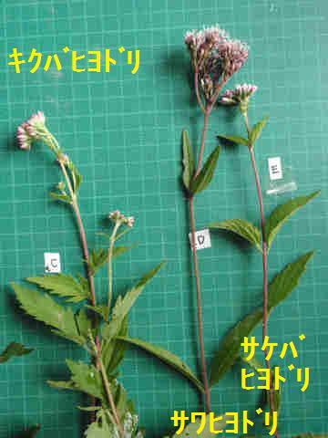 f:id:chuumeikun:20171003212717j:plain