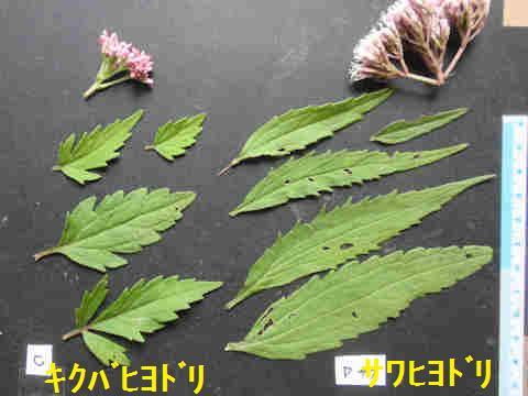 f:id:chuumeikun:20171003212744j:plain