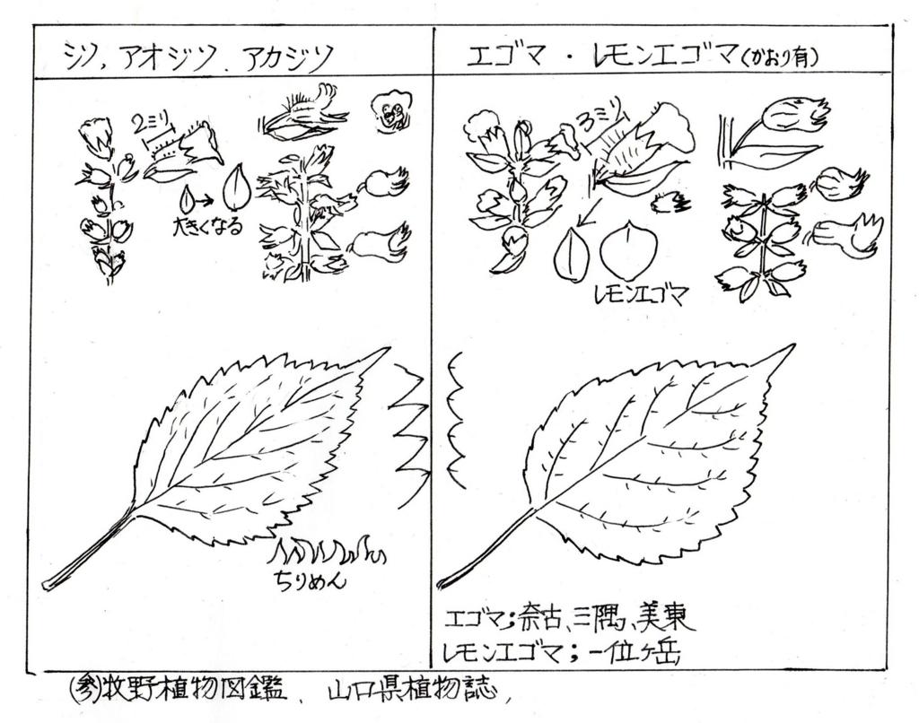 f:id:chuumeikun:20171010051026j:plain