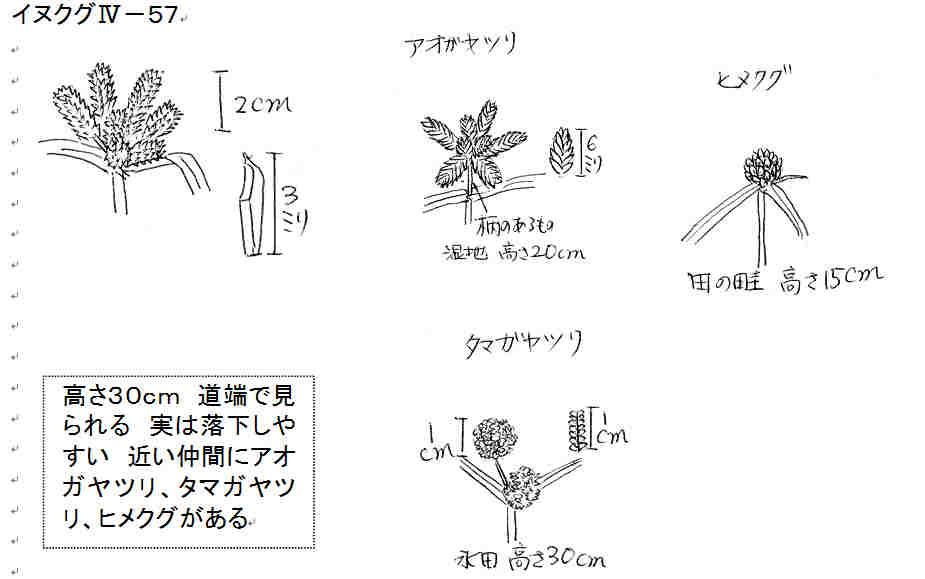 f:id:chuumeikun:20171020023920j:plain