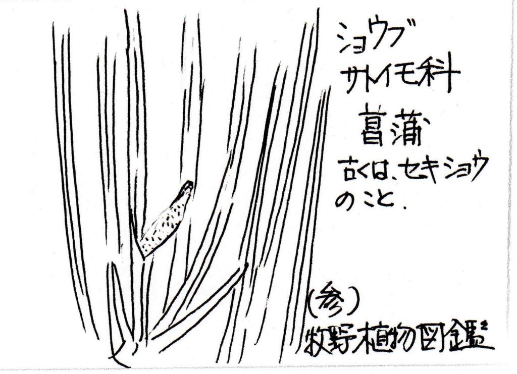 f:id:chuumeikun:20171031190738j:plain