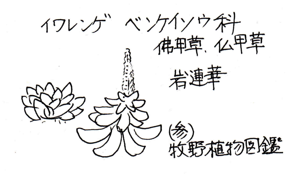 f:id:chuumeikun:20171031190908j:plain