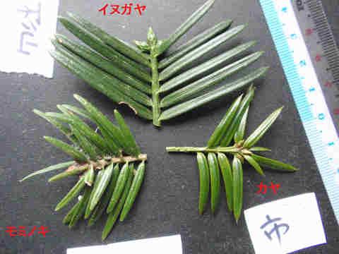 f:id:chuumeikun:20171109023219j:plain