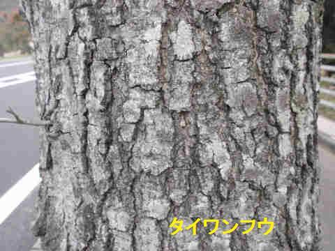f:id:chuumeikun:20171115003514j:plain