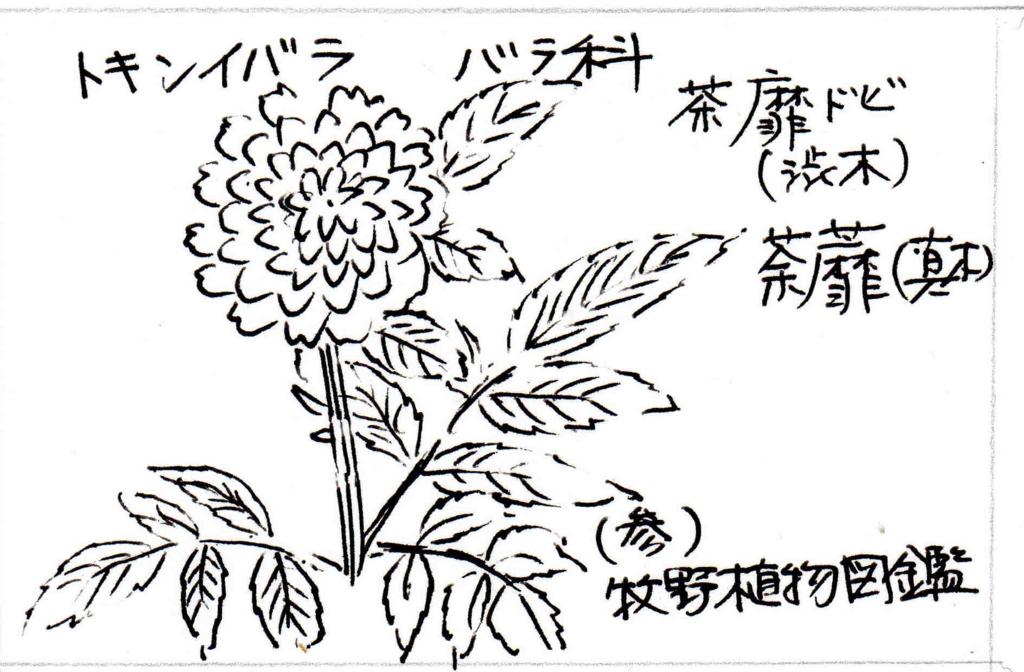 f:id:chuumeikun:20171120001607j:plain