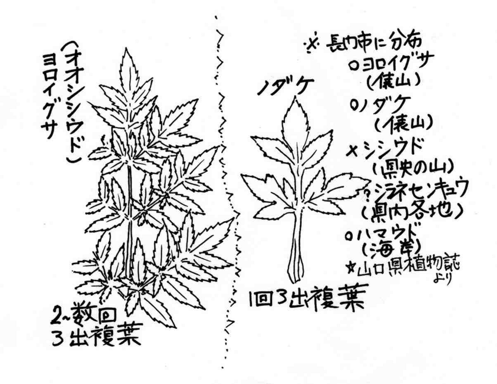 f:id:chuumeikun:20171121094048j:plain
