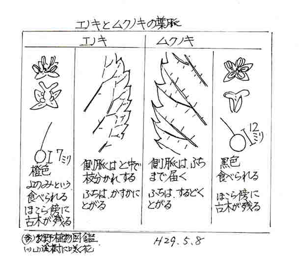 f:id:chuumeikun:20171219052442j:plain
