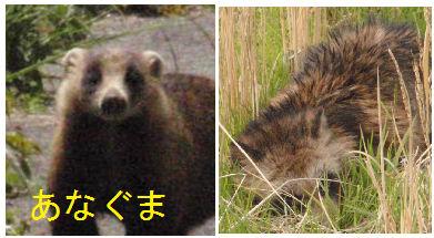 f:id:chuumeikun:20171225190548j:plain