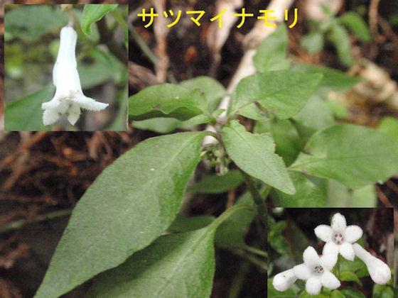 f:id:chuumeikun:20171228122848j:plain