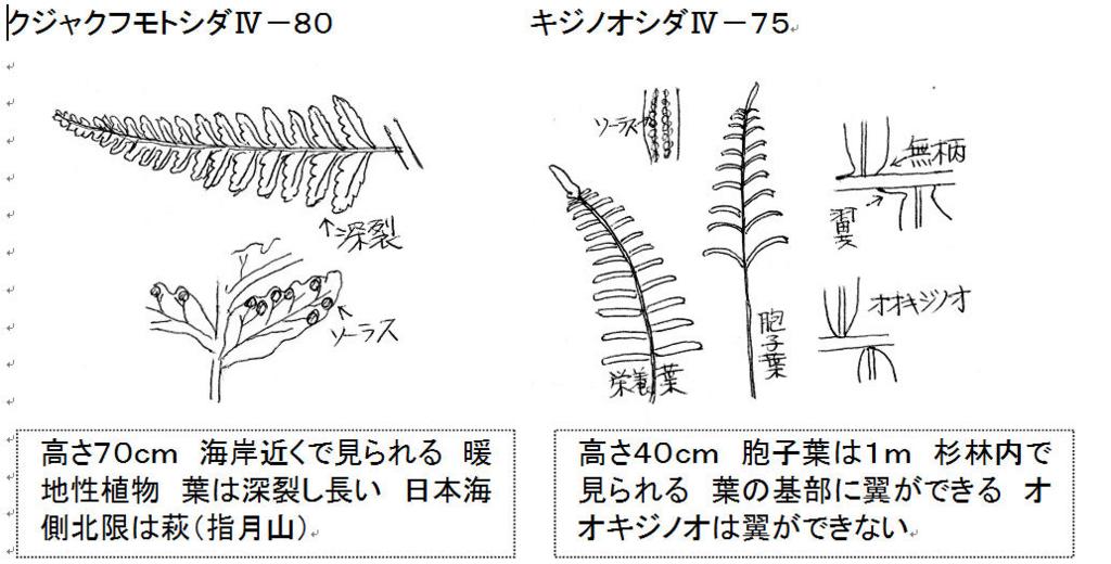f:id:chuumeikun:20171229140050j:plain