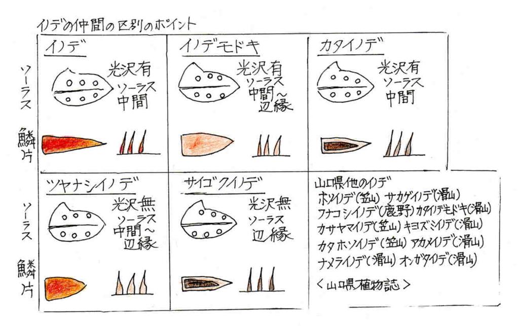 f:id:chuumeikun:20171229140143j:plain