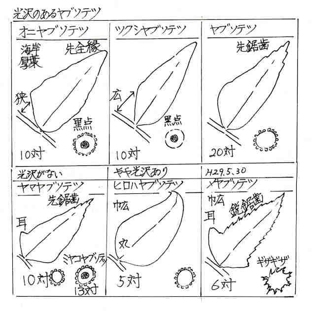f:id:chuumeikun:20171229140603j:plain