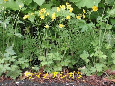 f:id:chuumeikun:20180105070214j:plain