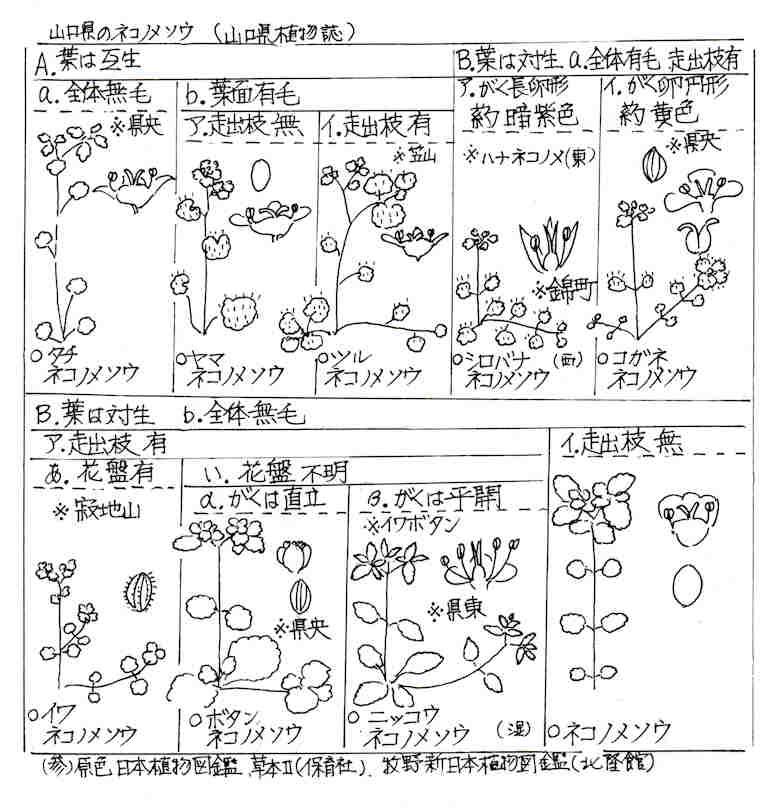 f:id:chuumeikun:20180105070317j:plain