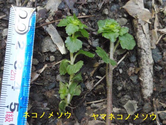 f:id:chuumeikun:20180105070337j:plain