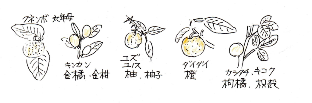 f:id:chuumeikun:20180117145411j:plain