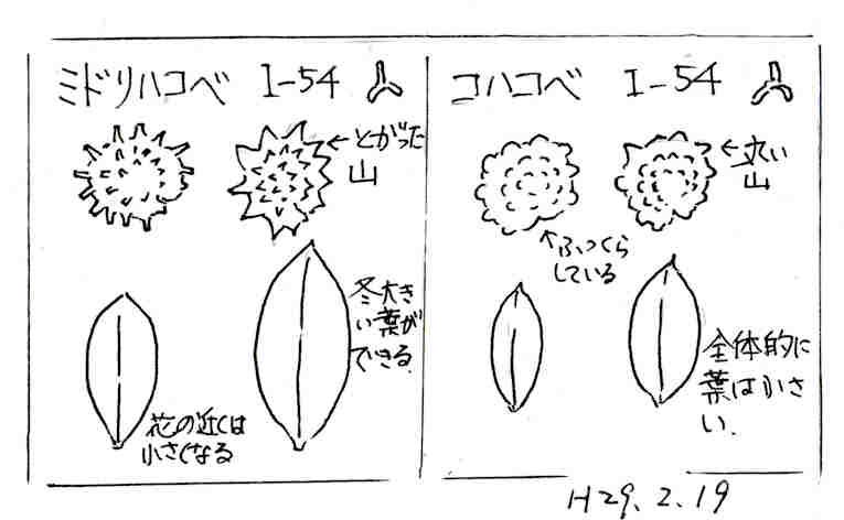 f:id:chuumeikun:20180119185621j:plain