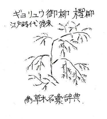 f:id:chuumeikun:20180129135943j:plain