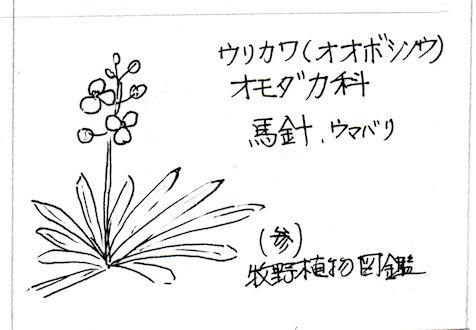 f:id:chuumeikun:20180225045444j:plain