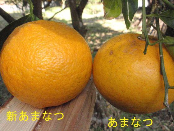f:id:chuumeikun:20180304193302j:plain
