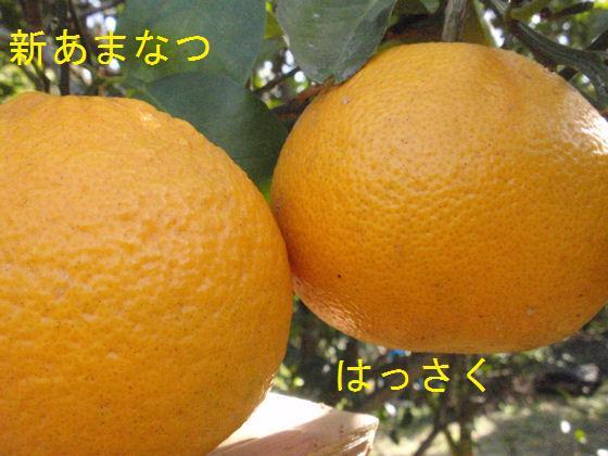 f:id:chuumeikun:20180304193411j:plain