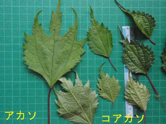 f:id:chuumeikun:20180307190313j:plain