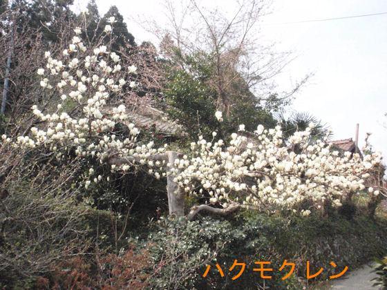 f:id:chuumeikun:20180327184703j:plain
