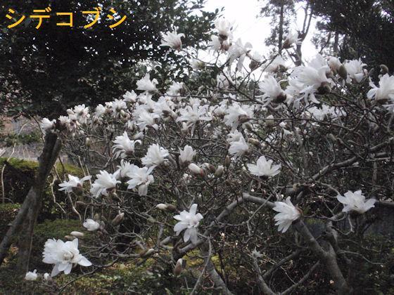 f:id:chuumeikun:20180327184722j:plain