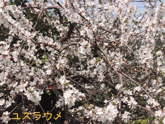 f:id:chuumeikun:20180327184738j:plain