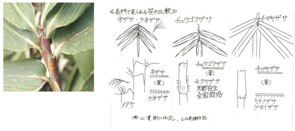 f:id:chuumeikun:20180404181055j:plain