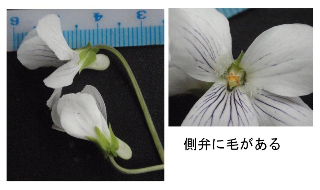 f:id:chuumeikun:20180407191630j:plain