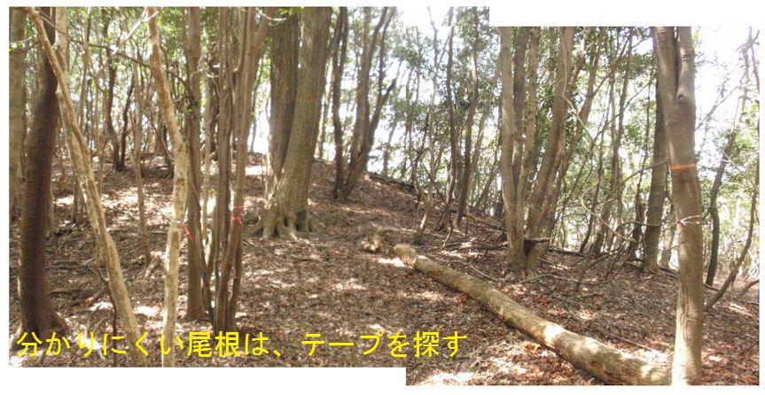 f:id:chuumeikun:20180410204041j:plain