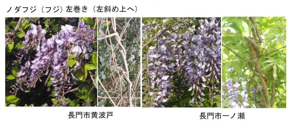 f:id:chuumeikun:20180412183152j:plain