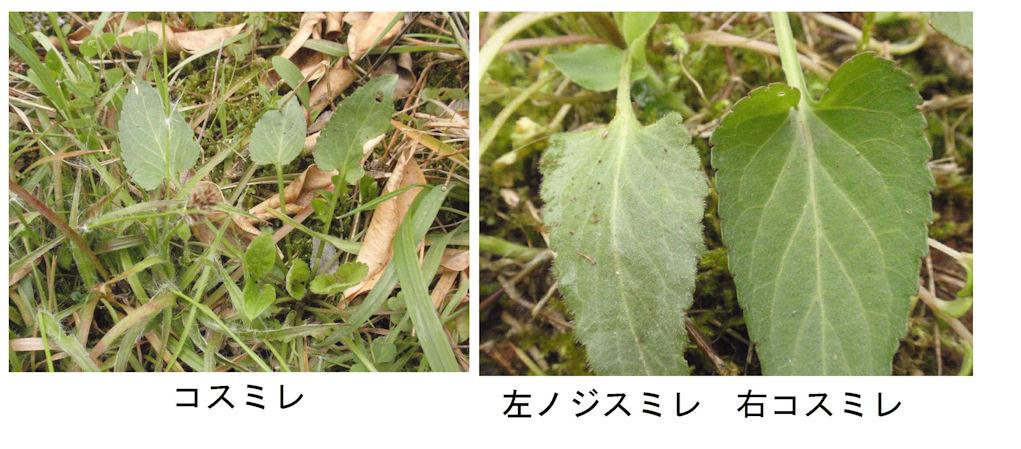 f:id:chuumeikun:20180413194326j:plain