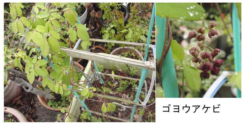 f:id:chuumeikun:20180415182047j:plain