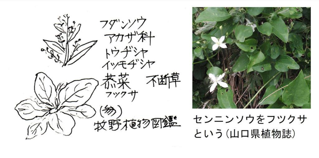 f:id:chuumeikun:20180416161908j:plain