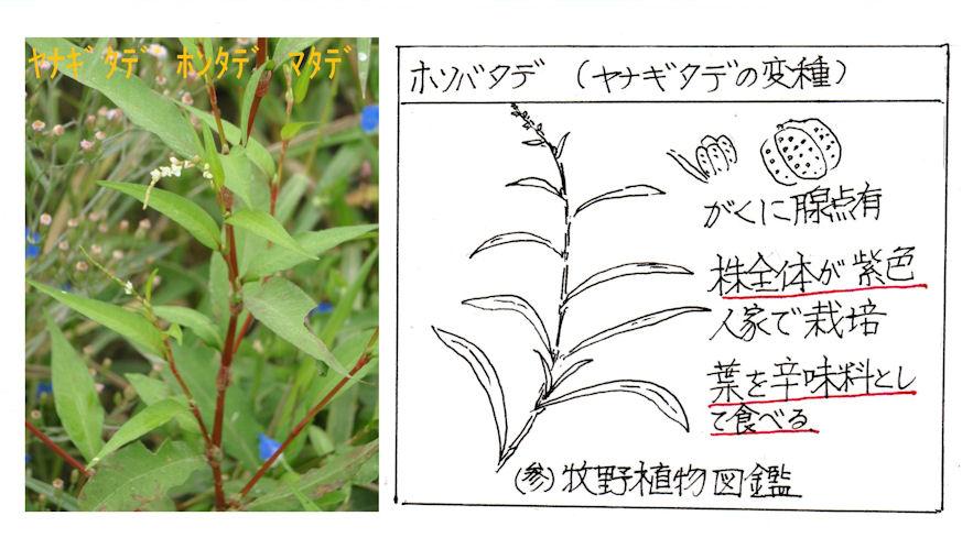 f:id:chuumeikun:20180416162016j:plain