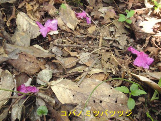 f:id:chuumeikun:20180430133155j:plain