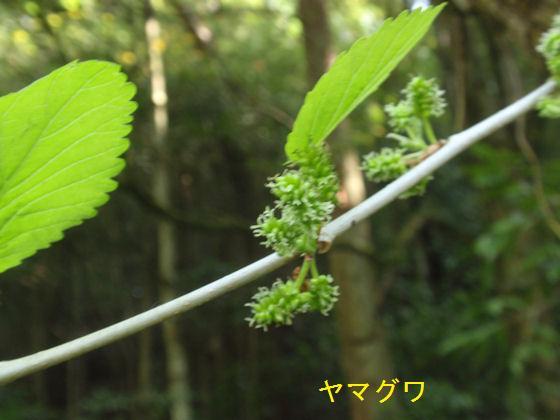 f:id:chuumeikun:20180430133239j:plain