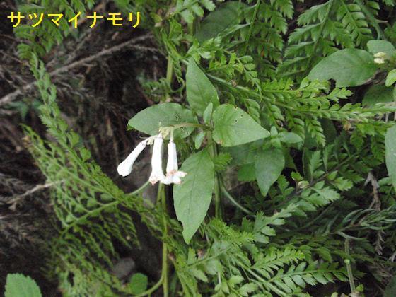 f:id:chuumeikun:20180430133254j:plain