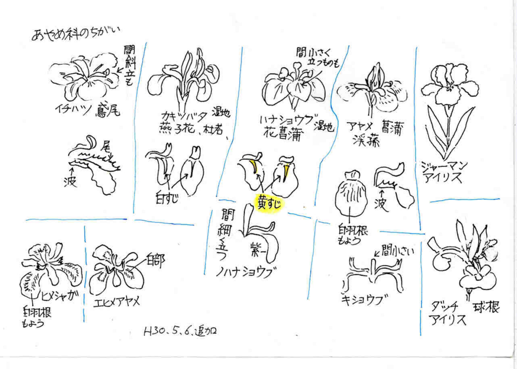 f:id:chuumeikun:20180506170646j:plain