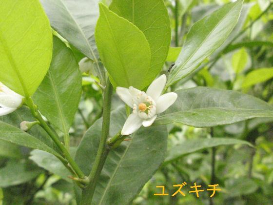 f:id:chuumeikun:20180508111722j:plain