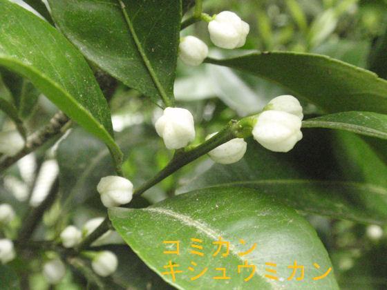 f:id:chuumeikun:20180508111738j:plain