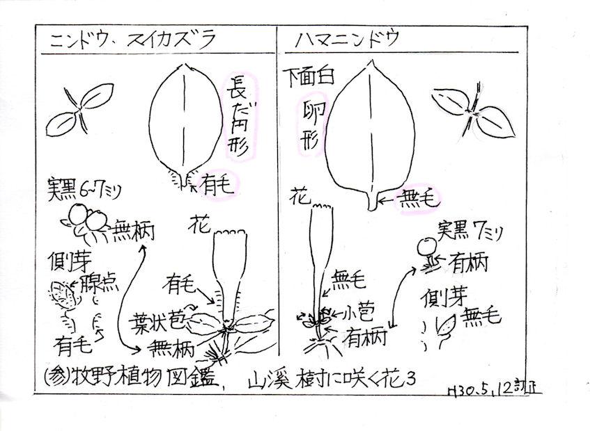 f:id:chuumeikun:20180513004026j:plain