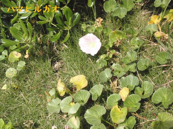 f:id:chuumeikun:20180513004416j:plain