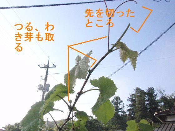 f:id:chuumeikun:20180524184313j:plain
